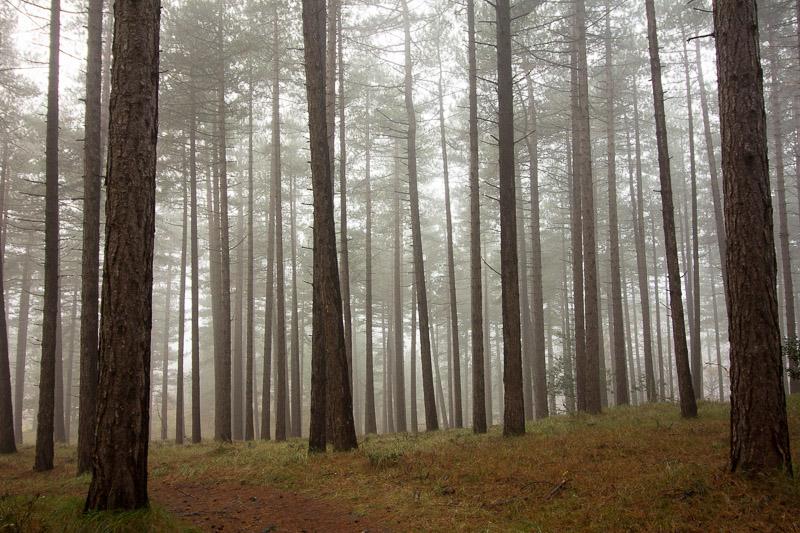 Ontdekkingen in het bos, vlak bij huis