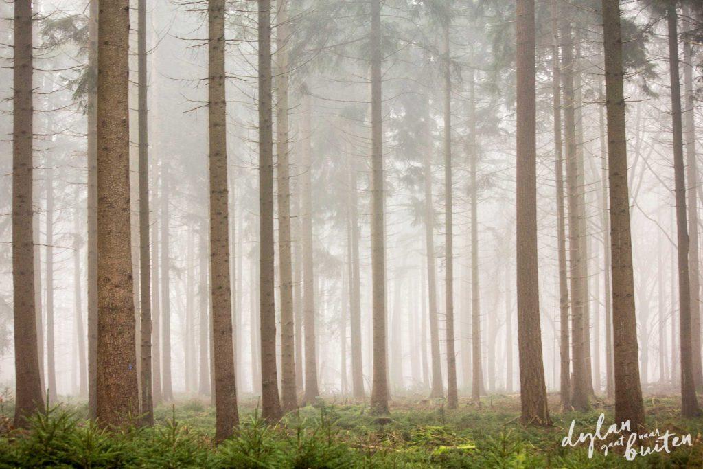 Sparren in de mist