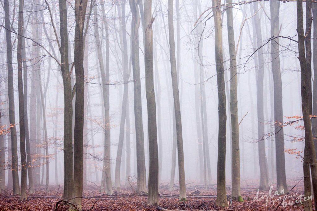 Sprookjesachtige dansende bomen