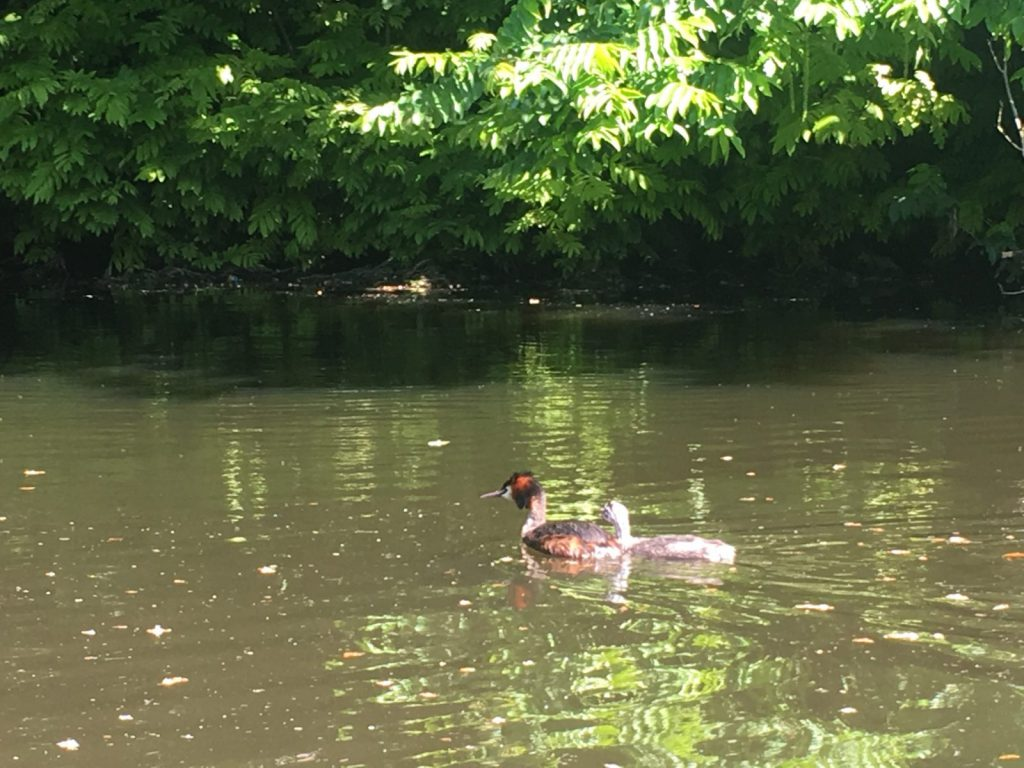 Vanuit het bootje Fuut spotten in Westbroekpark