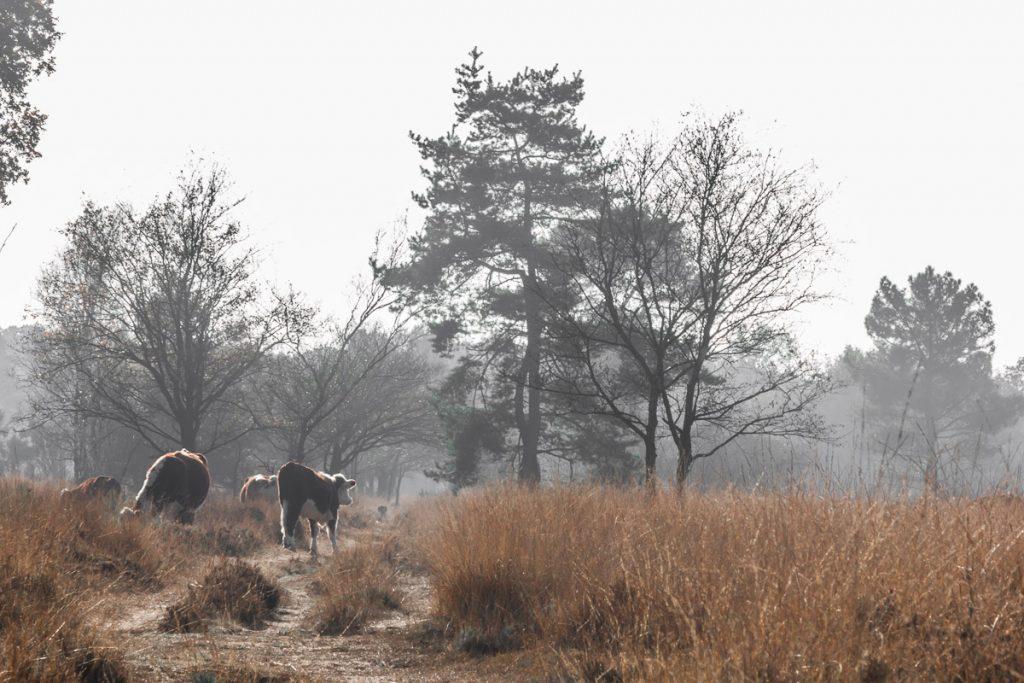 Overnachten in de natuur, Nederland