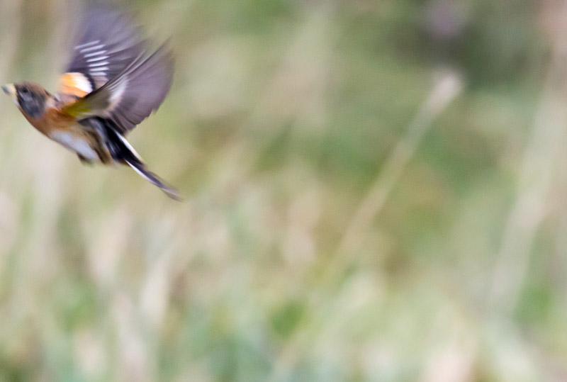 Vogels spotten in de tuin