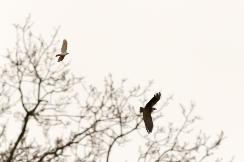 Natuur ontdekkingen in Nationaal Park Zuid-Kennemerland