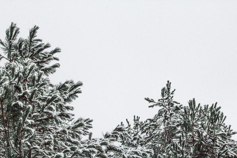 Nationaal Park Zuid Kennemerland kleur groen