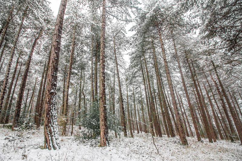 Witte bossen van PWN nabij Bloemendaal