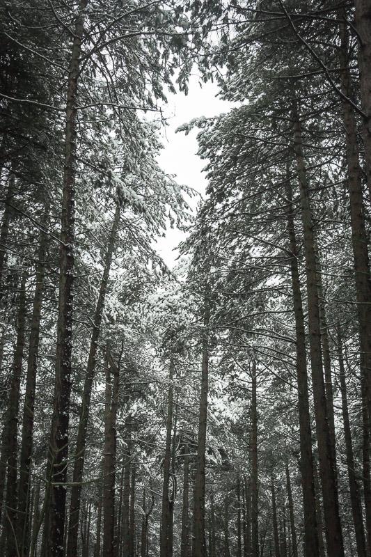 Wandelen door de bossen in Bloemendaal