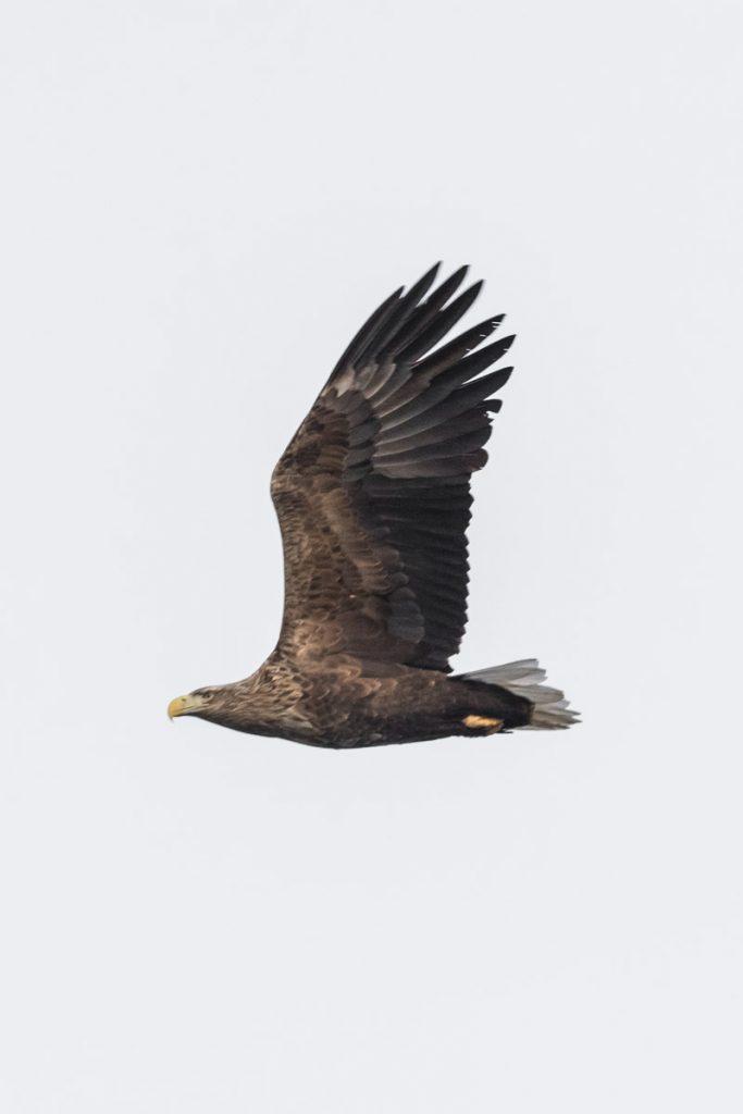 Vogelen in Noorweegse fjorden