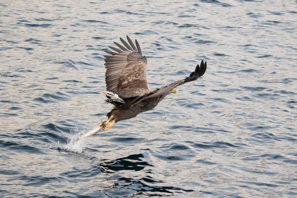 Vogels spotten vanaf boot, Lofoten