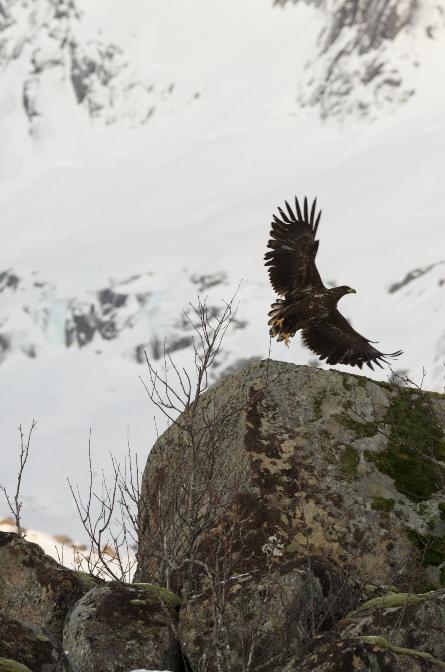 Vogels spotten in Noorwegen