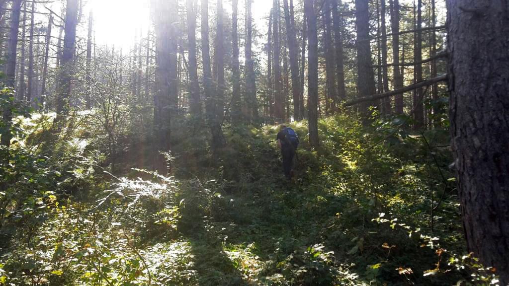 Natuurmoment in het dennebos
