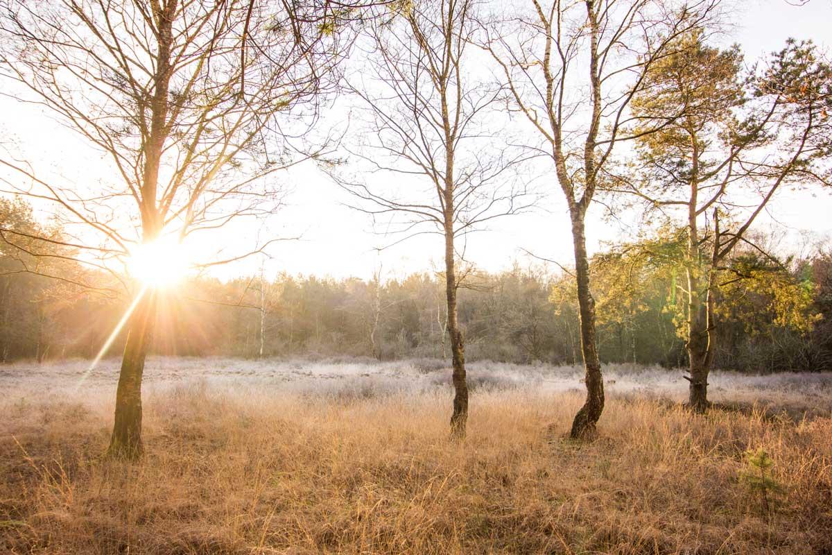 Ontdek de natuur in Den Haag