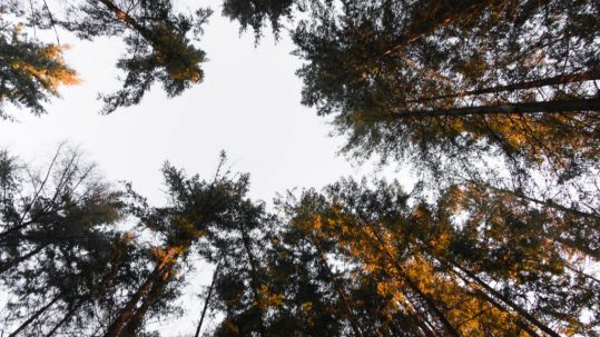 5 ultieme manier om tot rust te komen