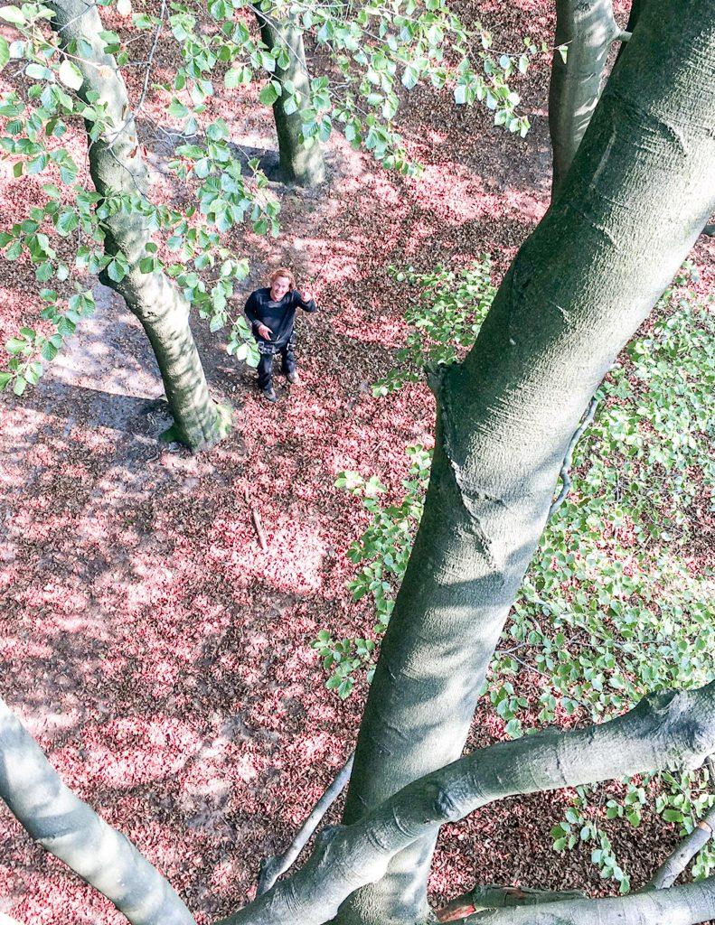 Uitzicht bij bomen klimmen
