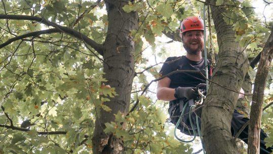 Dylan Haanappel klimt in boom