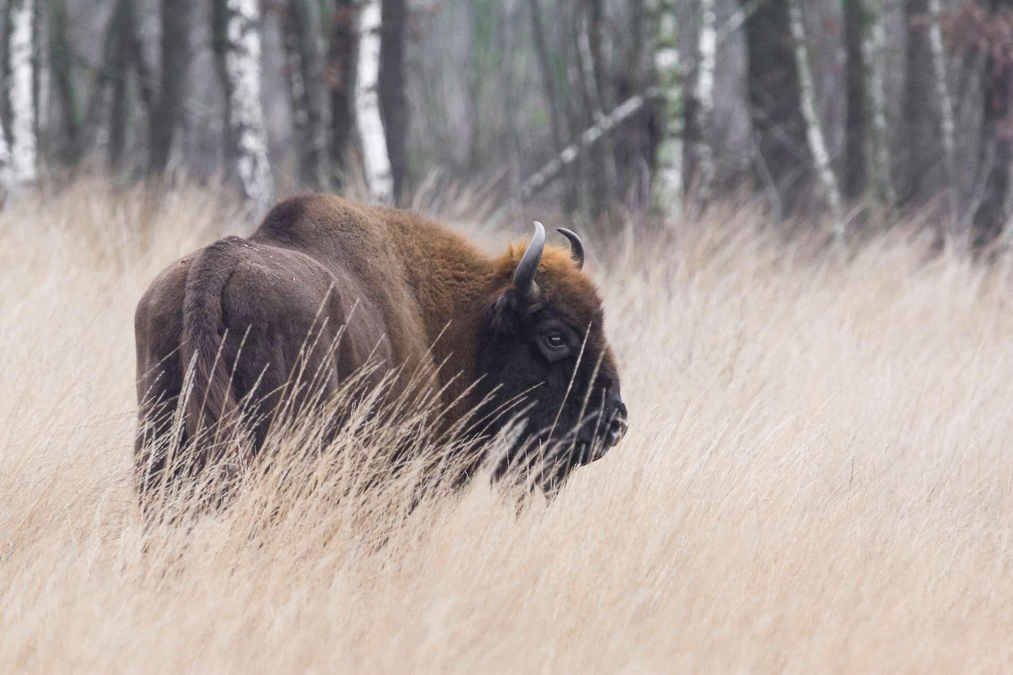 Young Rewilders Community